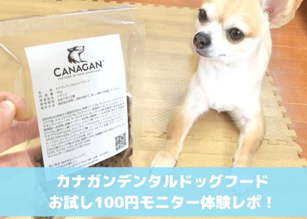 カナガンデンタル 100円お試しモニター