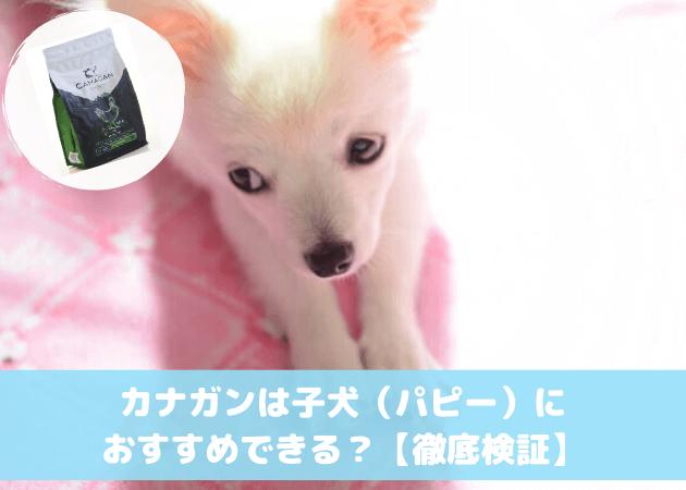 カナガンドッグフード 子犬(パピー)