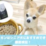 カナガン シニア犬(高齢・老犬)