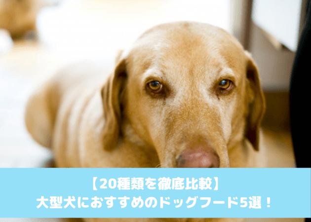 大型犬 おすすめドッグフード