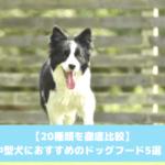 中型犬おすすめドッグフード