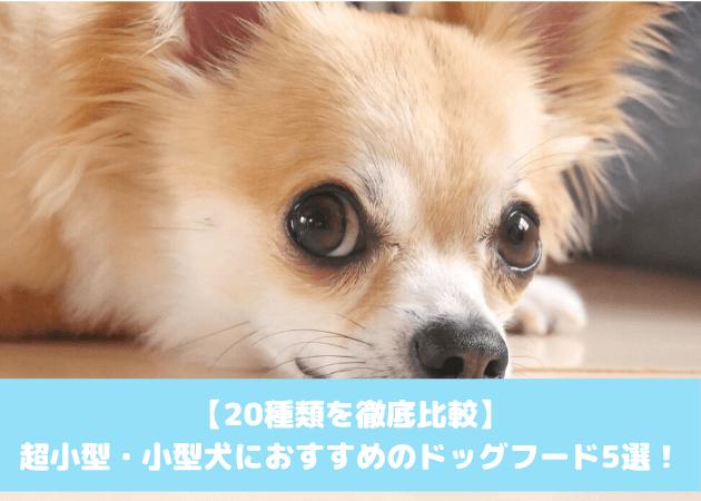 小型犬おすすめドッグフード